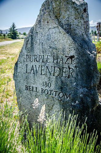 Purple Haze Lavender Farm-014