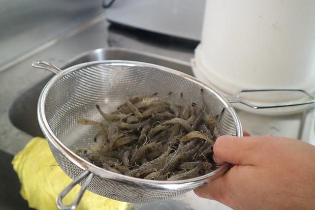 Garnalen koken