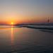 Early Beach Birds at Sunrise