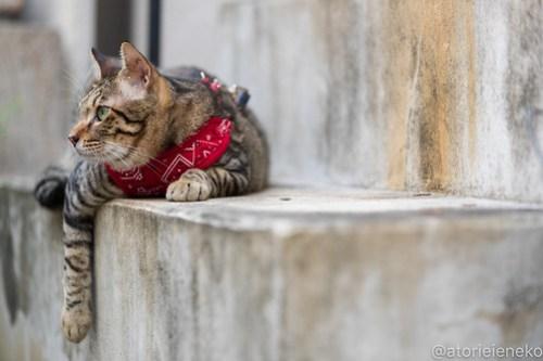 アトリエイエネコ Cat Photographer 42184826640_0a5fb03770 1日1猫! 8/12しっぽ天使&高槻ねこのおうち(第三回 猫・雑貨店&里親探し) 1日1猫!  高槻ねこのおうち 里親様募集中 譲渡会 猫写真 猫カフェ 猫 子猫 大阪 写真 保護猫 しっぽ天使 Kitten Cute cat 24節記