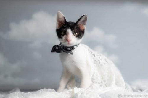 アトリエイエネコ Cat Photographer 43134372604_c0c74cc1c7 1日1猫!おおさかねこ俱楽部 里活中のマーチくんです♪ 1日1猫!  里親様募集中 猫写真 猫カフェ 猫 子猫 大阪 初心者 写真 保護猫カフェ 保護猫 ハチワレ ニャンとぴあ スマホ カメラ おおさかねこ倶楽部 Kitten Cute cat