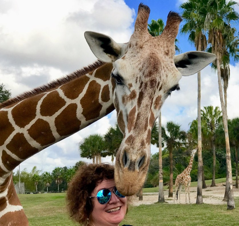 That's Me! During the Serengeti Safari® Tour at Busch Gardens Tampa Bay, Fla., Dec. 2016