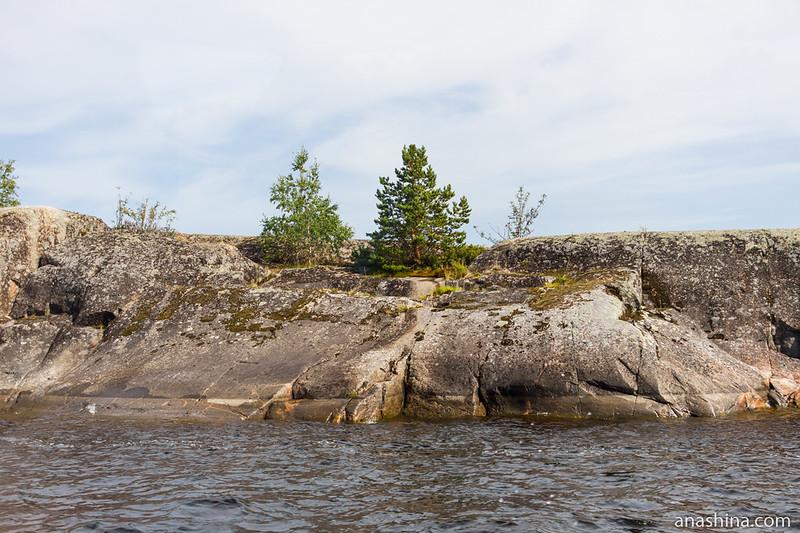 Деревца на скале, Ладожское озеро
