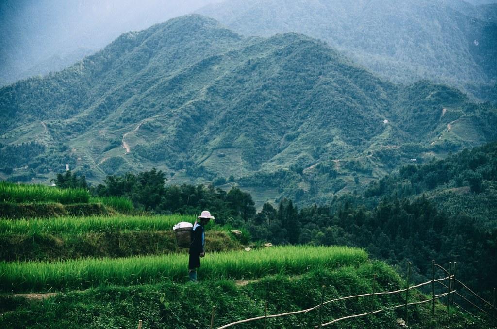 farm,-hmong-lady,-outlanderly
