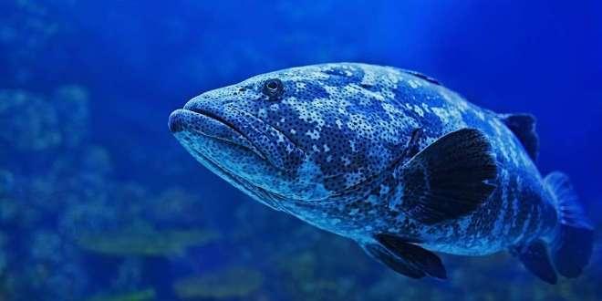 les-poissons-savent-compter-cognition