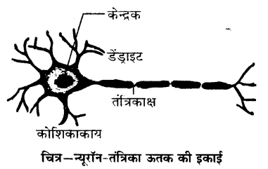 UP Board Solutions for Class 9 Science Chapter 6 Tissues 89 9