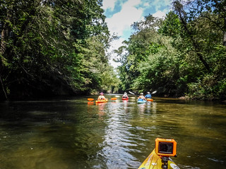 French Broad River - Rosman to Island Ford-191
