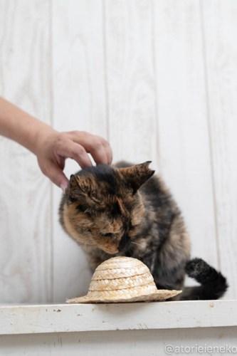 アトリエイエネコ Cat Photographer 44104645922_ee4c9113a0 1日1猫!しっぽ天使さんの「猫舎」に行ってきた 1/2♪ 1日1猫!  高槻 里親様募集中 猫写真 猫カフェ 猫 子猫 大阪 初心者 写真 保護猫 キジ猫 カメラ しっぽ天使 Kitten Cute cat
