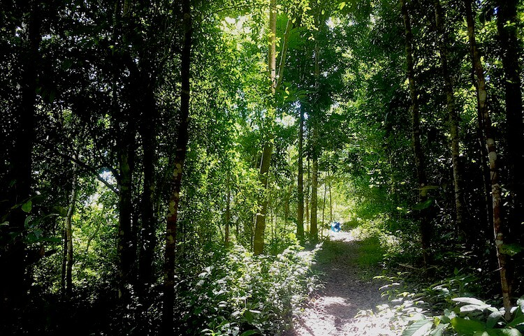 Irawan Eco Park, 50+ Things to Do in Puerto Princesa, Tourist Spots Survive Travel (9)
