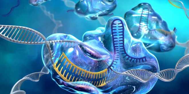 cellules-t-CRISPR