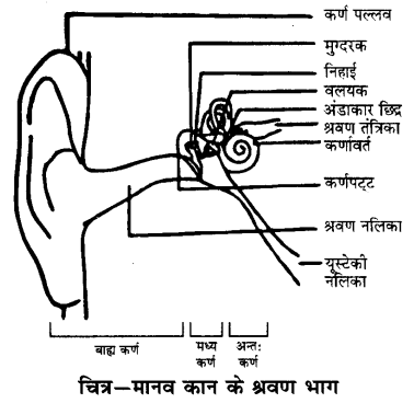 UP Board Solutions for Class 9 Science Chapter 12 Sound 197 22