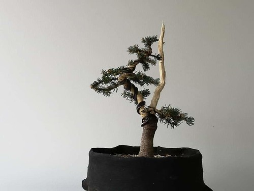 Spruce after
