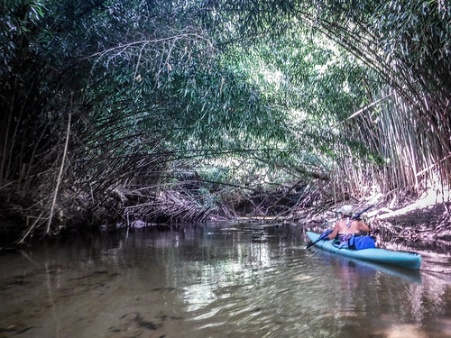 French Broad River - Rosman to Island Ford-222