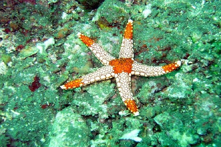 Starfish Island, 50+ Things to Do in Puerto Princesa, Tourist Spots Survive Travel (22)