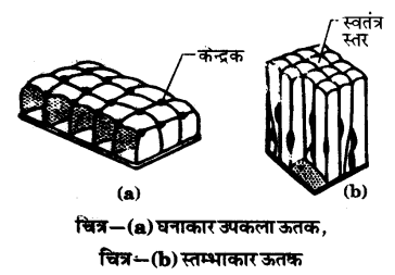 UP Board Solutions for Class 9 Science Chapter 6 Tissues l 5