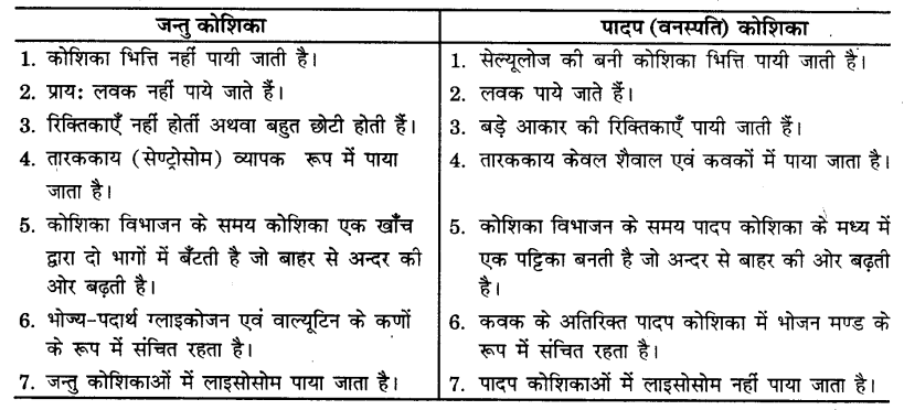 UP Board Solutions for Class 9 Science Chapter 5 The Fundamental Unit of Life s 7