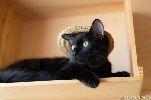 アトリエイエネコ Cat Photographer 30389114538_ee4d1a4bda 1日1猫!おおさかねこ俱楽部 里活中のコロンちゃんです♪ 1日1猫!  黒猫 高槻ねこのおうち 里親様募集中 猫写真 猫カフェ 猫 子猫 大阪 初心者 写真 保護猫カフェ 保護猫 ニャンとぴあ スマホ キジ猫 カメラ おおさかねこ倶楽部 Kitten Cute cat