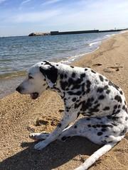 浜辺にオッド