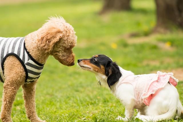 預けるにあたって十分な社会化がされている犬