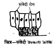 UP Board Solutions for Class 9 Science Chapter 6 Tissues l 5.5