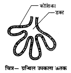 UP Board Solutions for Class 9 Science Chapter 6 Tissues l 5.2