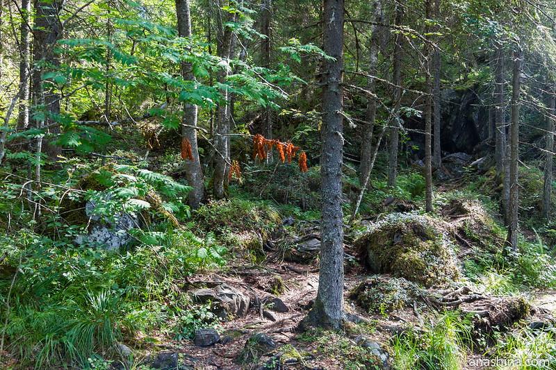 Типичный карельский лес