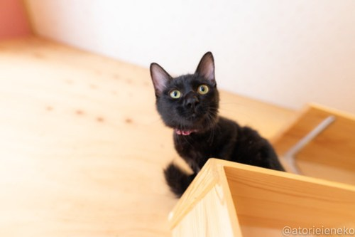 アトリエイエネコ Cat Photographer 29320145197_259f231a6c 1日1猫!おおさかねこ俱楽部 里活中のコロンちゃんです♪ 1日1猫!  黒猫 高槻ねこのおうち 里親様募集中 猫写真 猫カフェ 猫 子猫 大阪 初心者 写真 保護猫カフェ 保護猫 ニャンとぴあ スマホ キジ猫 カメラ おおさかねこ倶楽部 Kitten Cute cat