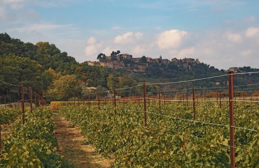 vineyard-1477369_1920