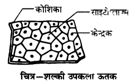 UP Board Solutions for Class 9 Science Chapter 6 Tissues l 5.4