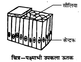 UP Board Solutions for Class 9 Science Chapter 6 Tissues l 5.3