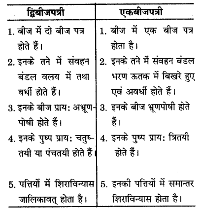UP Board Solutions for Class 9 Science Chapter 7 Diversity in Living Organisms l 10