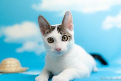 アトリエイエネコ Cat Photographer 43705458824_2e150dc166 1日1猫!なら地域ねこの会さんの猫撮影会♪ 1日1猫!  猫写真 猫カフェ 猫 子猫 奈良 大阪 初心者 写真 保護猫カフェ 保護猫 ハチワレ ニャンとぴあ スマホ キジ猫 カメラ なら地域ねこの会 Kitten Cute cat
