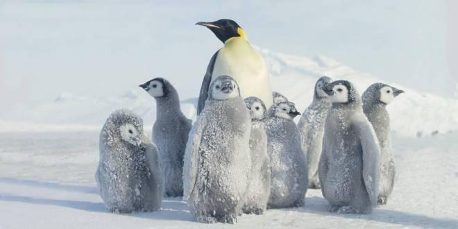 pingouins-momifies