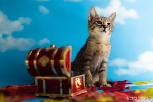 アトリエイエネコ Cat Photographer 43640127415_f0e8f66027 1日1猫!おおさかねこ倶楽部 里活中のレンくん♪ 1日1猫!  里親様募集中 猫写真 猫カフェ 猫 子猫 大阪 初心者 写真 保護猫カフェ 保護猫 ニャンとぴあ キジ猫 カメラ おおさかねこ倶楽部 Kitten Cute cat