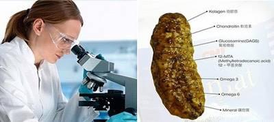 Penelitian Ilmiah Terkait Kandungan QnC Jelly Gamat Yang Mampu Mengobati Sinusitis