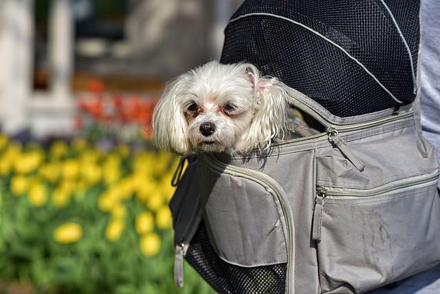 地震対策の防災グッズであるキャリーに入る犬