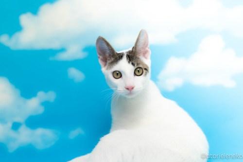 アトリエイエネコ Cat Photographer 30554564858_3befedc302 1日1猫!なら地域ねこの会さんの猫撮影会♪ 1日1猫!  猫写真 猫カフェ 猫 子猫 奈良 大阪 初心者 写真 保護猫カフェ 保護猫 ハチワレ ニャンとぴあ スマホ キジ猫 カメラ なら地域ねこの会 Kitten Cute cat