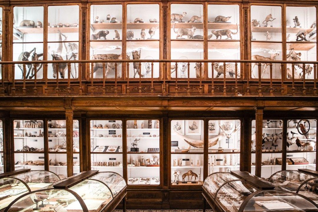 Collezione di storia naturale Coimbra
