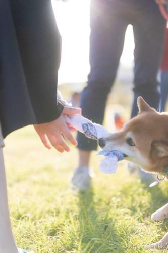 アトリエイエネコ Cat Photographer 43652745520_1665ffecf9 1日1ワン!安満人倶楽部(あまんどクラブ)10/21わんこと一緒にクリーンキャンペーンに行ってきた! 1日1猫!  高槻 犬 安満人倶楽部 子猫 大阪 写真 保護猫 保護犬 スマホ Kitten dog Cute cat
