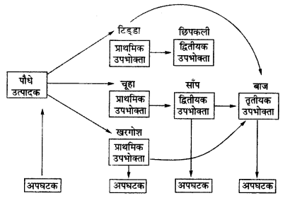 UP Board Solutions for Class 12 Biology Chapter 14 Ecosystem 2Q.3