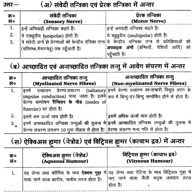 UP Board Solutions for Class 11 Biology Chapter 21 Neural Control and Coordination 23