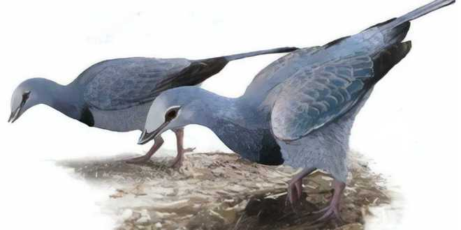 fosille-poumons-chine-oiseau