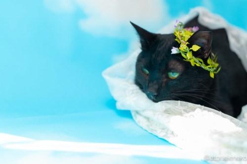 アトリエイエネコ Cat Photographer 30673415647_5a3a01bb06 1日1猫!高槻ねこのおうち 里活中 ねこ谷さん♫ 1日1猫!  黒猫 高槻ねこのおうち 里親様募集中 里親募集 猫写真 猫カフェ 猫 子猫 大阪 写真 保護猫カフェ 保護猫 カメラ Kitten Cute cat