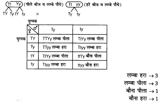 UP Board Solutions for Class 12 Biology Chapter 5 Principles of Inheritance and Variation Q.7