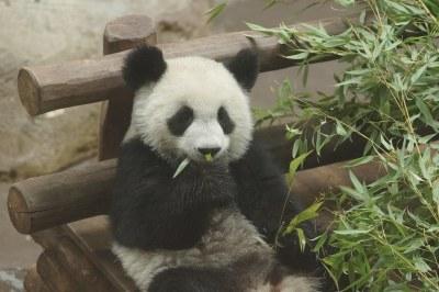 1-year-old Yuan Meng (圆梦/圓夢) 2018-10-16