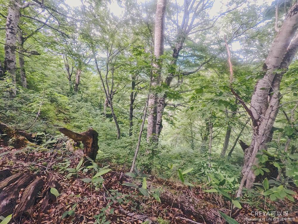 20181018   行走在日本東北   治癒之森的一堂生命課程,健行在自然首都的福島只見町 24.jpg