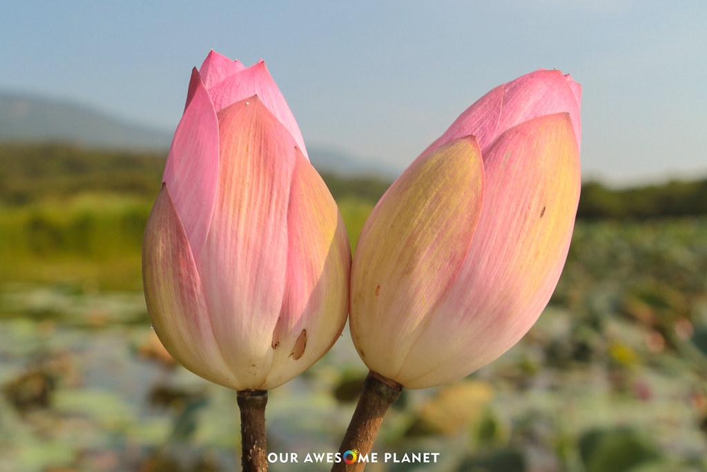 OAP-Taitung-0938