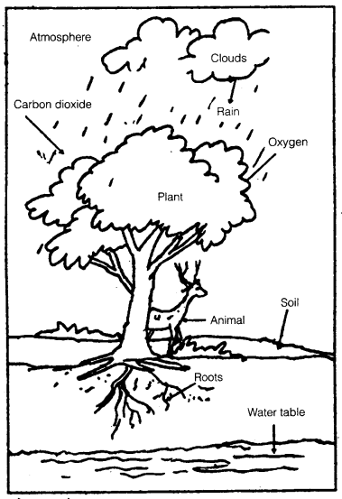 NCERT Solutions for Class 7 Science Chapter 17 Forests Our Lifeline 1