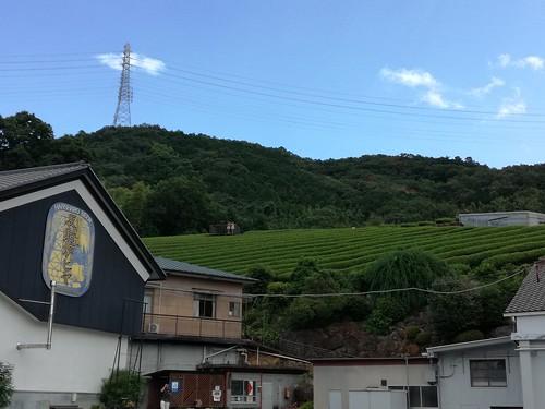 Cultivos cercanos a la residencia de Egawa Hidetatsu