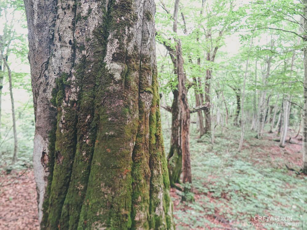 20181018 | 行走在日本東北 | 治癒之森的一堂生命課程,健行在自然首都的福島只見町 20.jpg
